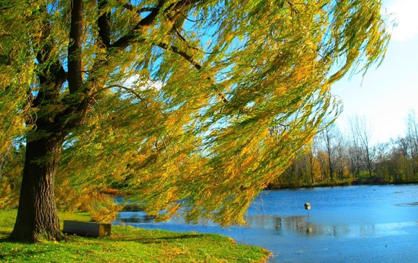 Фото обои осень, природа, озеро, дерево, берег, ива