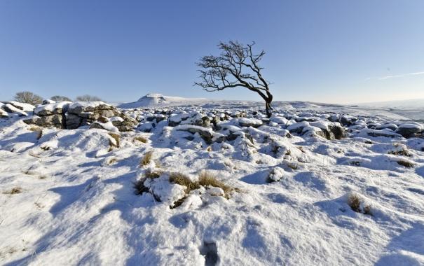 Фото обои зима, небо, снег, дерево, Англия, Великобритания, Северный Йоркшир