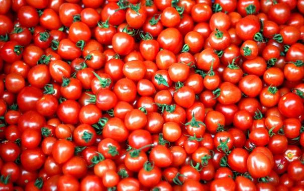 Фото обои овощи, помидоры, томаты, красный