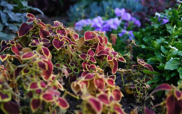 Фото обои осень, растения, октябрь