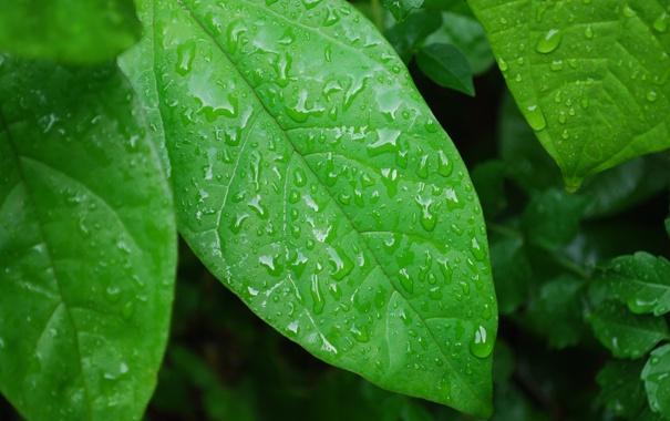 Фото обои green, water, leaves