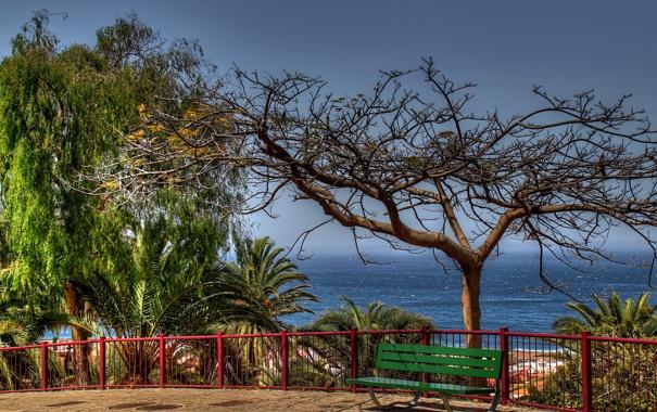 Фото обои лавочка, сухое дерево, пальмы, море