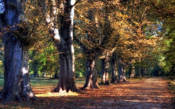 Фото обои дорога, деревья, парк