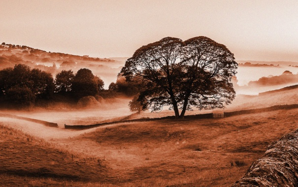 Фото обои небо, деревья, туман, холмы