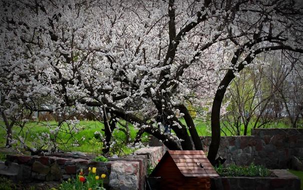 Фото обои цветы, дерево, весна, сад