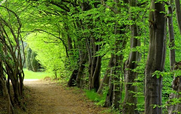 Лес лето деревья обои фото картинки