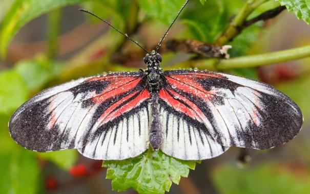 Фото обои макро, роса, бабочка