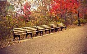 Обои листья, путь, парк, деревья, скамейки