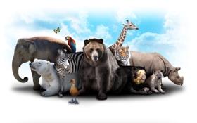 Обои жираф, облака, небо, звери, бабочка, гиена, слон