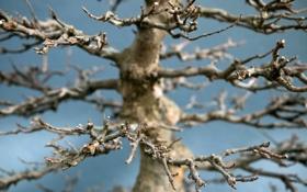 Обои макро, природа, дерево