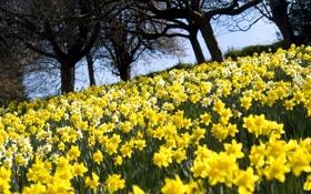 Картинка поле, деревья, цветы, природа, желтые, лепестки, бутоны