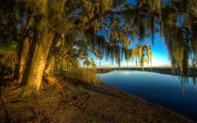Картинка США, река, ветки, солнце, Georgia, берег, деревья