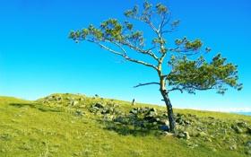 Картинка поле, небо, трава, камни, дерево, Россия, Сибирь