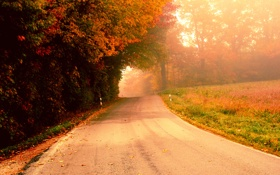 Картинка дорога, осень, деревья, туман, утро