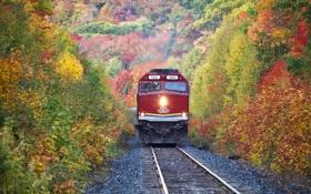 Обои дорога, осень, листья, деревья, рельсы, поезд, склон