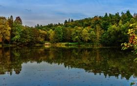 Картинка лес, вода, деревья, отражение, река, берег, Германия