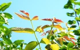 Обои листья, макро, ветки, природа, дерево, листок, весна