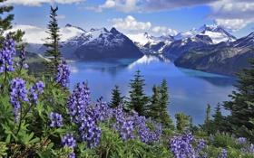 Картинка природа, горы, озеро, цветы