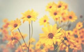 Обои цветы, стебли, лепестки, боке, желтые цветы