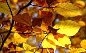 Обои осень, листья, деревья, природа, макро фотографии, осенние обои