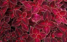 Обои листья, текстура, лето