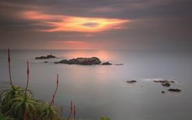 Обои камни, скалы, небо, агава, облака, море, зарево