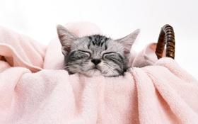 Обои котенок, корзина, мордочка