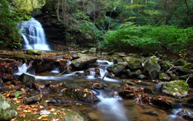 Картинка зелень, лес, вода, деревья, камни