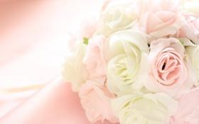 Обои цветы, лепестки, ткань, бахрома