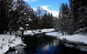 Обои лес, река, деревья, зима, горы, снег