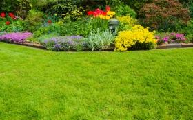 Картинка цветы, природа, клумба, nature, flowers, flowerbed