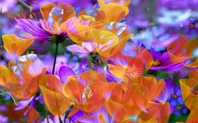 Обои линии, природа, лепестки, краски, рендеринг, цветы