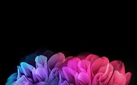 Обои цветы, лепестки, LG G Flex 2