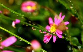 Обои капельки, травинки, розовые цветочки