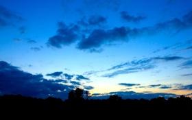 Обои небо, облака, деревья, вечер