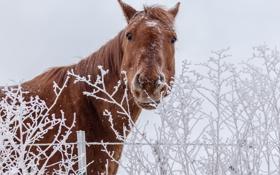 Картинка зима, природа, конь