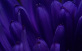 Обои Синий, лепестки, Blue, неба, Minimalistic