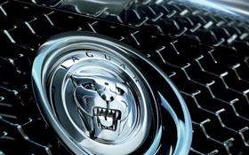 Картинка авто, Jaguar, логотип