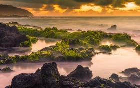 Обои водоросли, закат, природа, камни, океан, побережье
