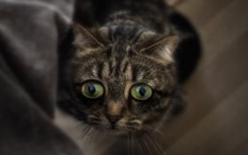 Картинка глаза, котенок, испуг, мордочка