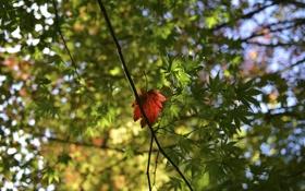 Обои осень, листья, деревья, размытость, марко
