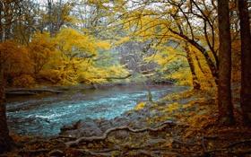 Обои осень, лес, деревья, корни, река