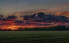 Обои Sunset, Summer, Manitoba