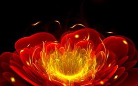 Картинка цветок, линии, полумрак, свет, лепестки, пламя