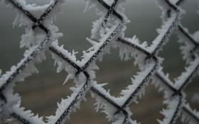 Картинка снег, решётка, иней