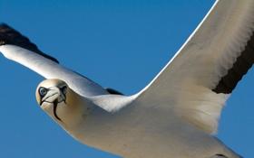 Картинка полет, птица, крылья, чайка, клюв, seagull