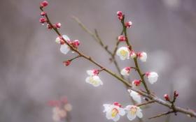 Картинка цветы, ветка, весна, сад
