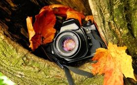 Обои дерево, расщелина, фотоаппарат, зеркальный, красно-жёлтая листва, однообъективный, «Зени́т»