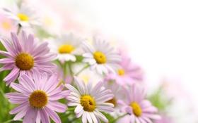 Обои цветы, букет, petals