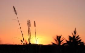 Картинка небо, трава, макро, закат, растение, горизонт